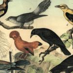 Catalogue d'oiseaux de Messiaen