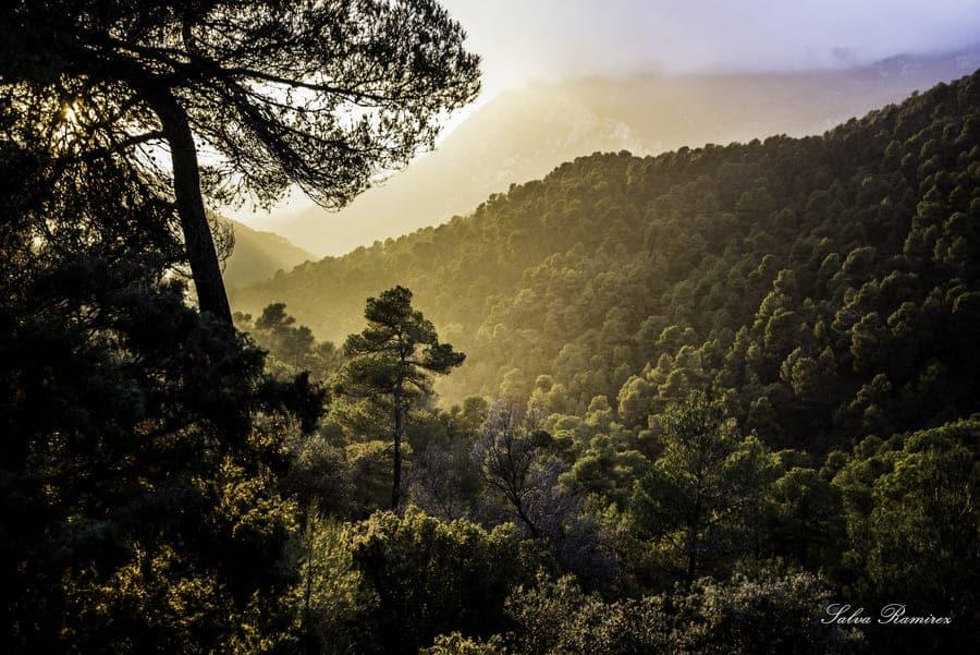 Bosques del Parque Natural de Sierra Espuña © Mancomunidad de Sierra Espuña / Salva Ramírez